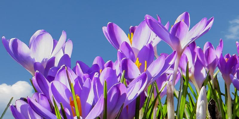 Imboden Umgebungspflege Und Gartenbau Gasser Mediaprint